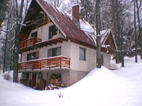Pine woods - Trnovo