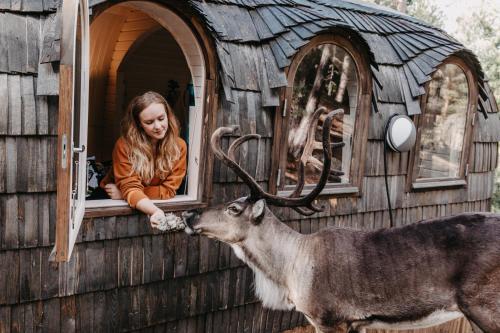 . Igluhut – Sleep with reindeer