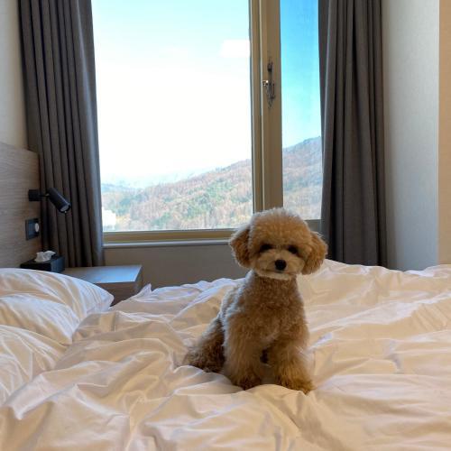 Standard Condominium with Pet Friendly
