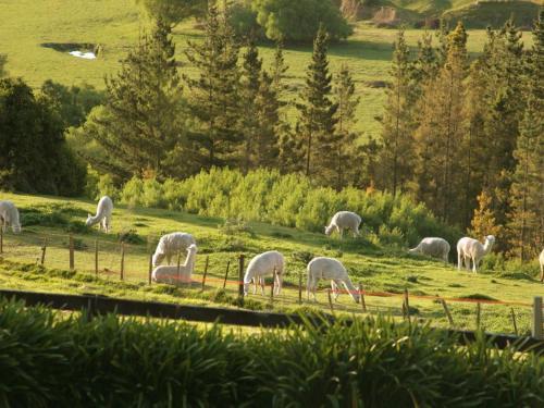 3519 State Highway 50, Maraekakaho 4171, New Zealand.