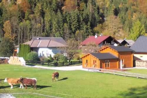 Arcadis - Chalet - Obertraun/Dachstein