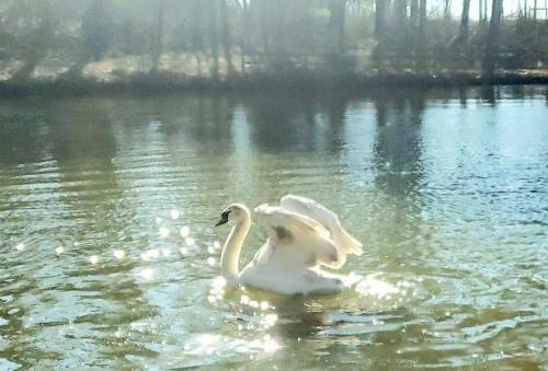 Farm Stay, Swan Sanctuary Cottage, ECO Nature Reserve - Limekiln, Pennsylvania