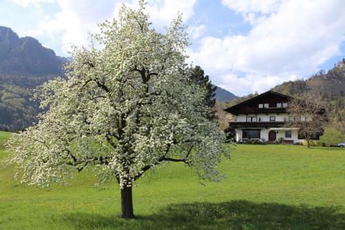 Apartments in Kramsach/Tirol 452 - Kramsach