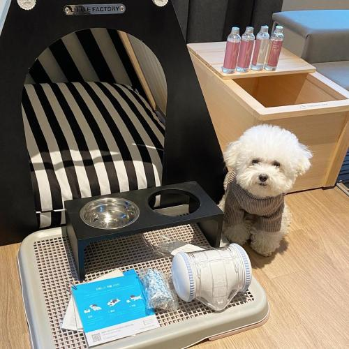 [Pet Friendly] Sky Royal (High Floor, Check-in lounge, Air-dresser, Free Mini bar) & Pet Friendly BBQ Camping for 2
