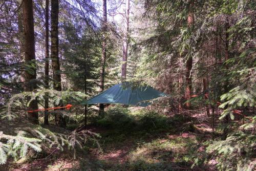 Baumzelt im Wald - Accommodation - Regen