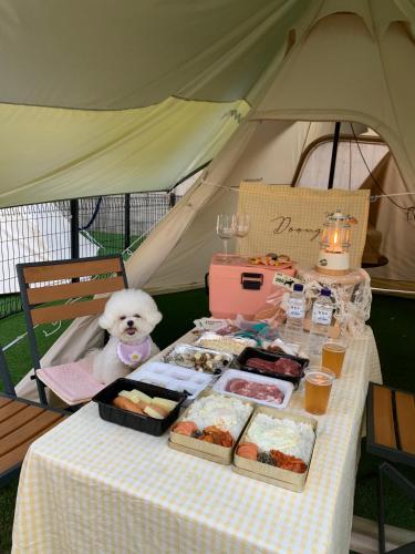[Pet Friendly] Pet Room_Renewal Room, Suite Condo(30pyeong) & Pet Friendly BBQ Camping for 2
