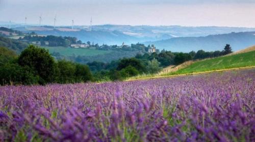 Cosy Cottage on lavender farm near Albi France - Location saisonnière - Saint-André