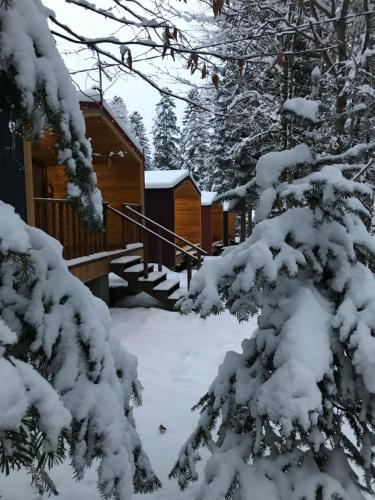 Forest House Resort - Chalet - Arkhyz