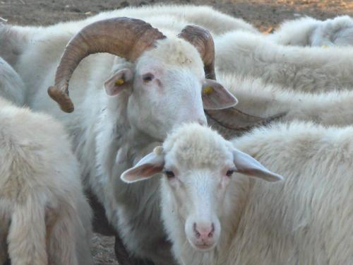 Agriturismo Rocca su Moru bild8