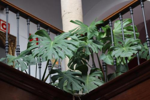 Habitación Doble con cama supletoria (3 adultos) Hotel Las Casas del Consul 10