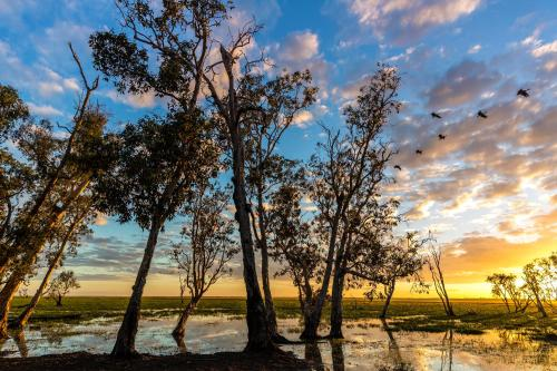 Mary River Floodplain, Kakadu, Northern Territory, Australia.