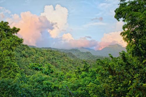 Ross Blvd, Dominica, West Indies.