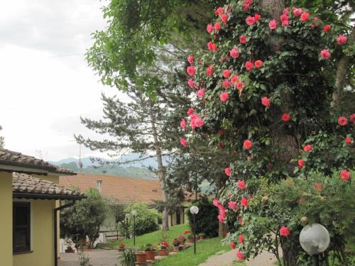 Valle degli Ulivi.  Foto 13