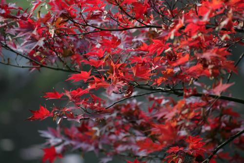 Hotel Chinzanso Tokyo photo 35
