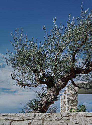 Vounaria, Koroni Messinias, 24004, Greece.