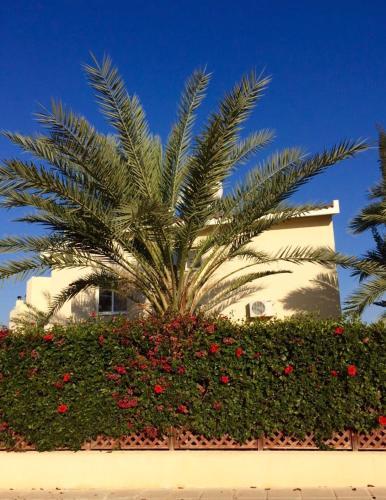 Villa Marina - Photo 8 of 20