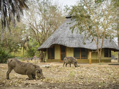 Фото отеля Montebelo Gorongosa Lodge & Safari