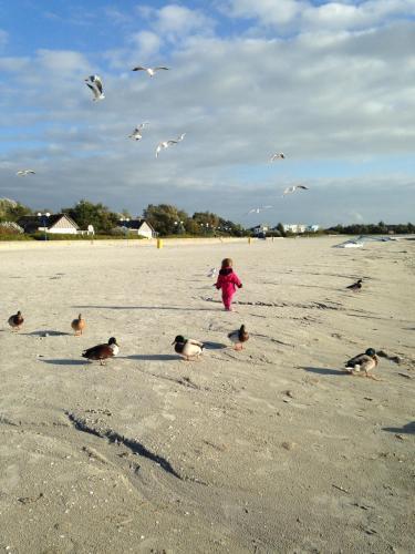 . Beach-Dijkvilla Seaview Horizons