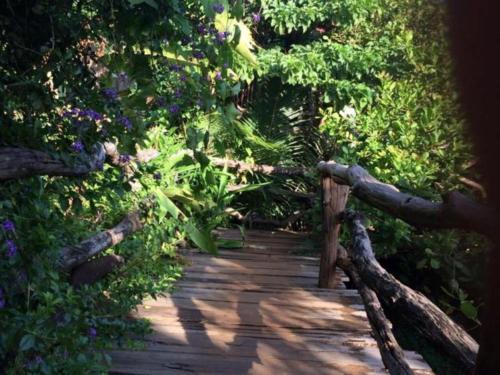 . Tree Top Eco-Lodge