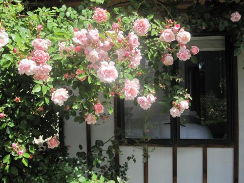 Rose Cottage at The Elms - Christchurch