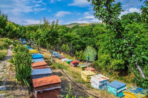 Фото отеля HyeLandz Eco Village Resort