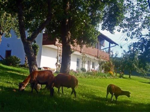 Ferienhof Pfeffer
