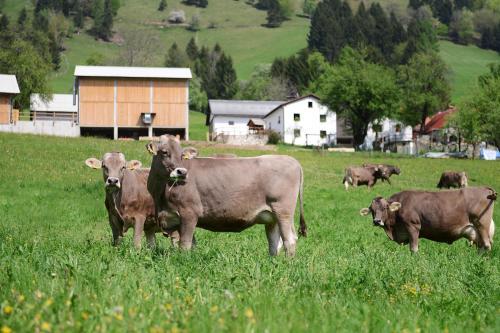 Ekološka turistična kmetija pri Lovrču - Apartment - Tolmin