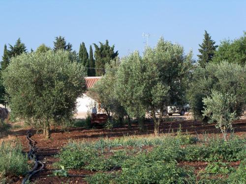 Foto - Agriturismo Il Pavone