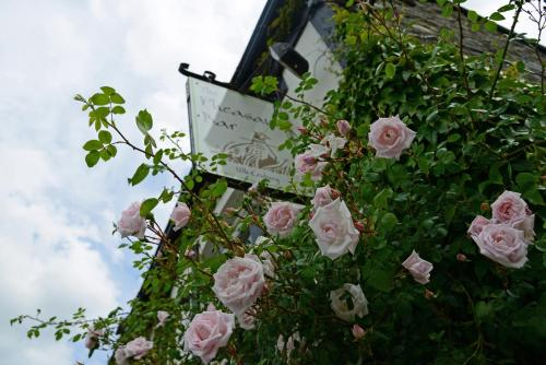 The Mulberry Inn (B&B)