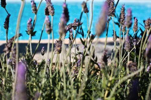 Platis Gialos beach, Sifnos, Greece.
