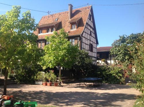 Gites la Cour Zaepffel - Apartment - Dambach-la-Ville