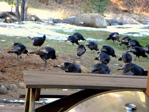 Riverview Pines - Estes Park, CO 80517