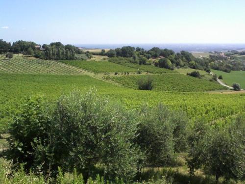 Фото отеля Agriturismo Monte Valbelle