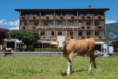 . Jungfrau Hotel