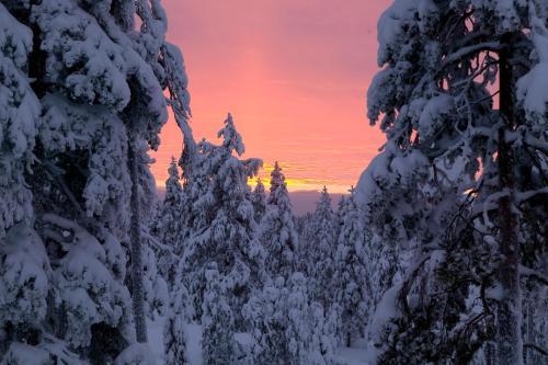 Tarvantie 3 Arctic Circle, 96930 Rovaniemi, Finland.