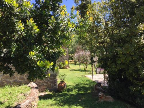 Casa de 2 dormitorios El Vergel de Chilla tiene 3 alojamientos Abejas 1 Abejas 2 y Libélula 12