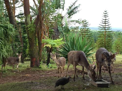 Domaine de Bois Cheri, Bois Cheri, Mauritius.