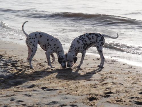 . Residenz Lausitz - Apartments für Urlaub mit Hund