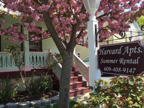 Harvard Apartments 1 - Cape May, NJ 08204