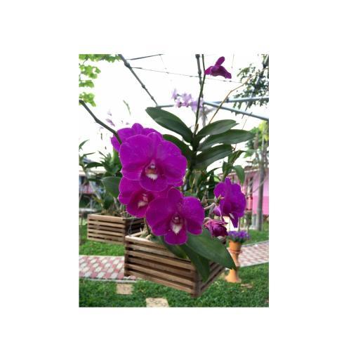 Ploencheewa photo 23