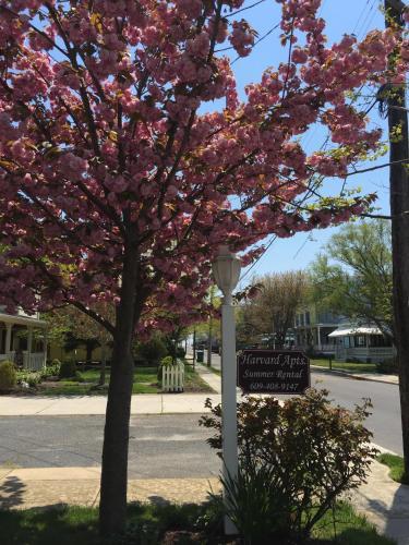 Harvard Apartment #2 - Cape May, NJ 08204