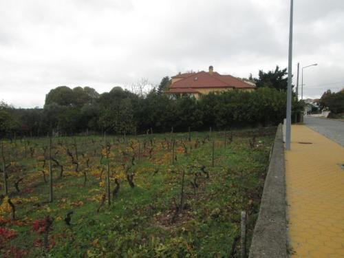 Quinta Do Prado - Photo 5 of 49