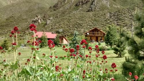 La Araucaria - Accommodation - Potrerillos