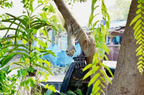 Early Bird Hostel Ayutthaya photo 20