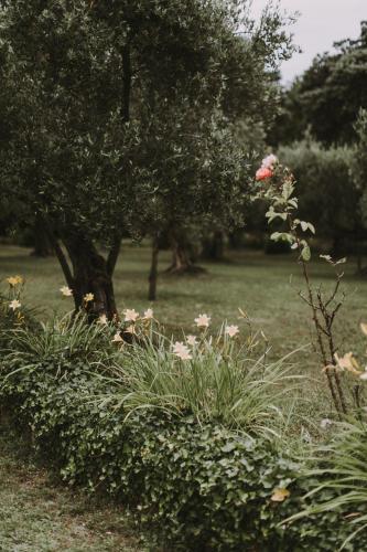 Il Pettirosso B&B photo 73
