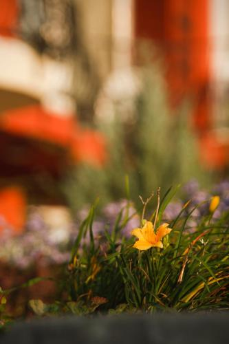Szőnyi Garden Hotel Pest photo 104