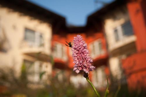 Szőnyi Garden Hotel Pest photo 109