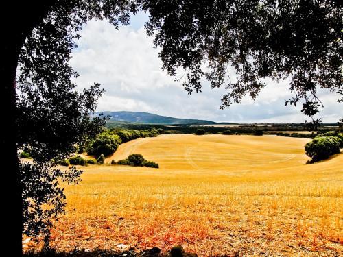 Hostal Camino Del Perdon