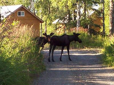 Alaska Creekside Cabins - Cottonwood Creek