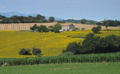 Casale Nicole mare e campagna - Montemarciano